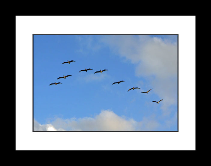 Follow the leader blcak frame