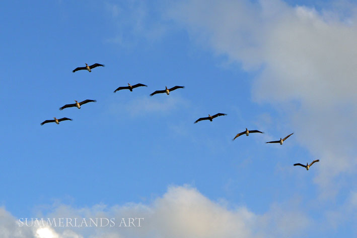 Photo of birds flying in formation