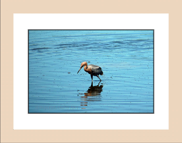 Reddish Egret wood frame