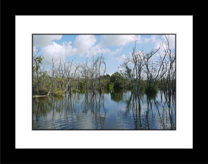 Reflections in Florida Swamp black frame