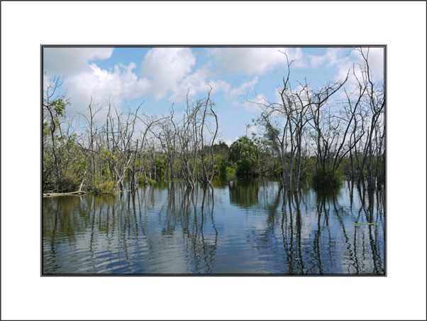 Buy Reflections in Florida Swamp unframed