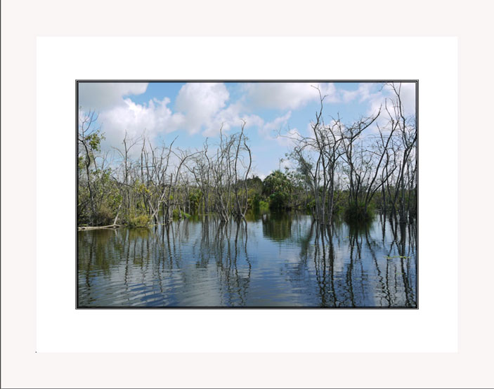 Reflections in Florida Swamp white frame