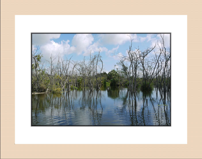 Reflections in Florida Swamp wood frame